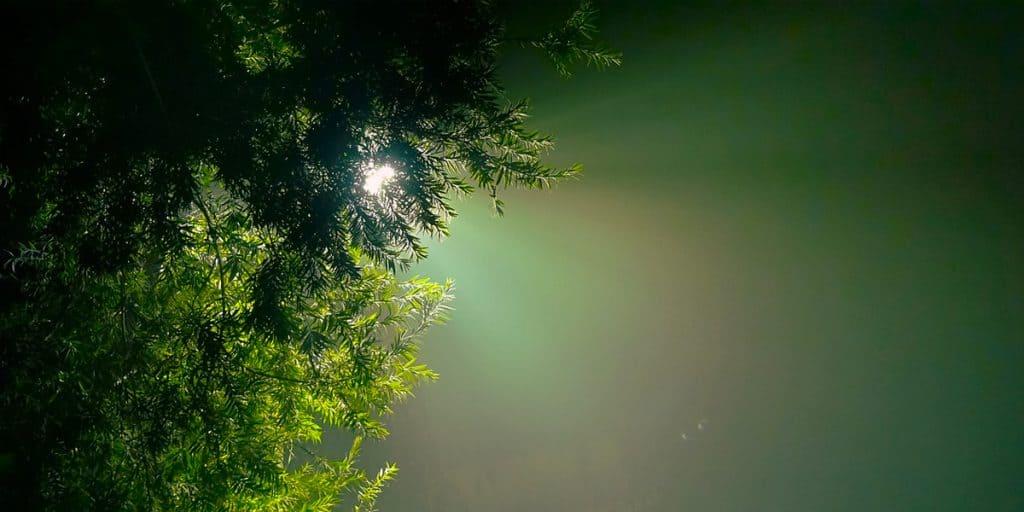 Valo siivilöityy havupuun oksan läpi.